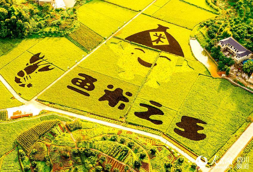稻田航拍圖。李貴平攝