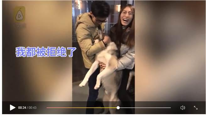 臺灣一哈士奇犬向小母狗求愛被拒哭倒主人懷裏