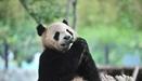 雲南昆明野生動物吃粽子迎端午