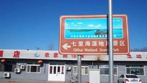 天津國家級保護區被區政府轉租 6000畝蘆葦蕩然無存.jpg