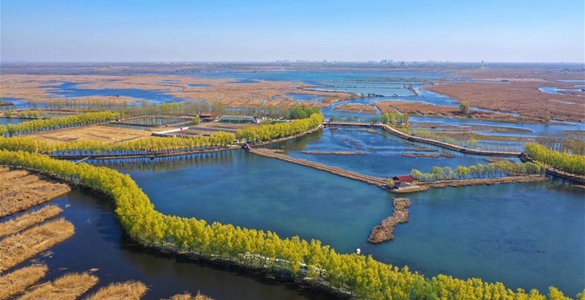 美麗家園 生態中國