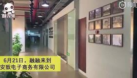 安致股份:讓世界愛上中國品牌