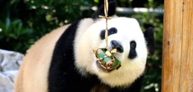熊貓吃粽子
