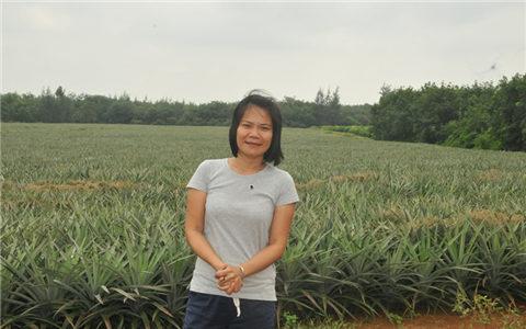 2017年10月,周才娜在自己種植的鳳梨田前