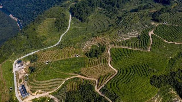 貴州新添14個全國地理標誌農産品,你pick哪一個?