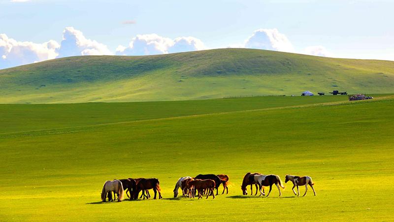內蒙古.png