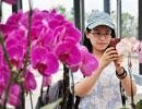 渝臺共建蘭花基地 計劃每年1500萬株蝴蝶蘭銷歐洲