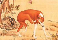 《十駿犬之金翅獫圖》