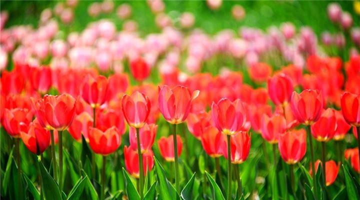春天來了很快又要走了,不可辜負的那些花兒