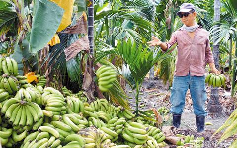 香蕉fffffffff.jpg