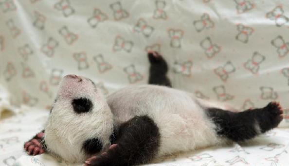 熊貓.png