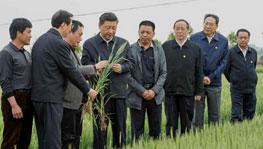 習近平考察小崗村,重溫中國改革歷程