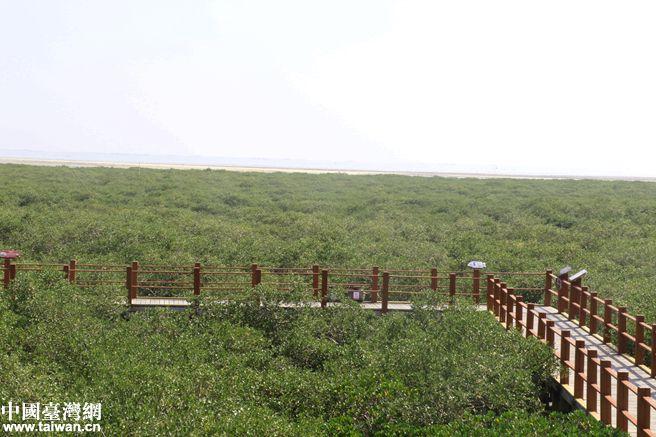 【风从海上来】金海湾红树林--人与自然和谐共