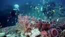 蘇伊士灣海底二戰英貨船殘骸仍保存完好