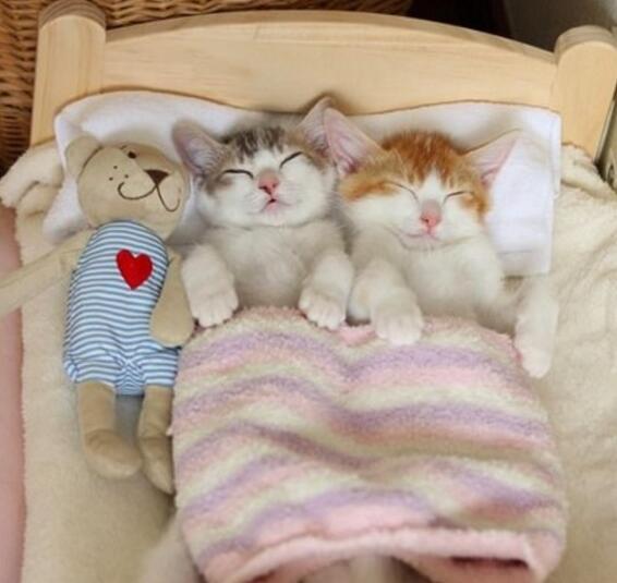 双胞胎猫兄妹抱著才肯睡 姿势同步让人融化了(图)