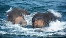 兩頭年幼大象海水中掙扎命懸一線 獲人類營救